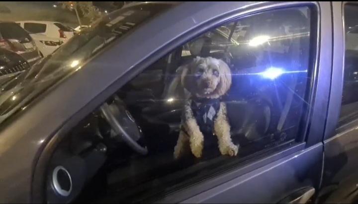 Cão preso
